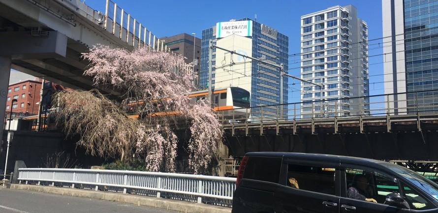 中央線と枝垂れ桜