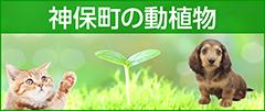 神保町の動植物